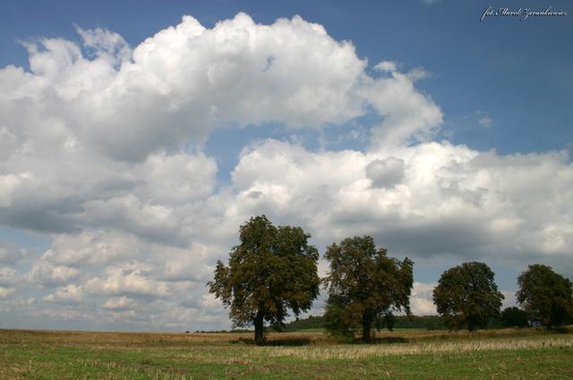 Krajobrazy okolic Rozwadzy.jpeg