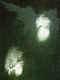 P7120556.jpeg